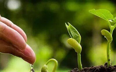 ¿Qué son los bioestimulantes agrícolas?