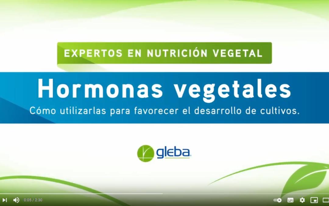 Hormonas vegetales. Cómo utilizarlas para favorecer el desarrollo de los cultivos.