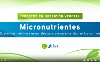 Micronutrientes. Sustancias nutritivas esenciales para asegurar calidad en los cultivos.