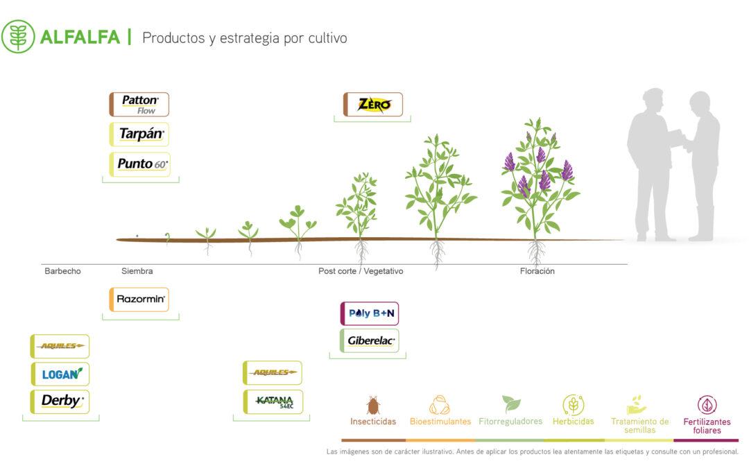 fenologia-alfalfa