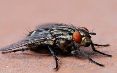 Control de moscas, detección y tratamiento