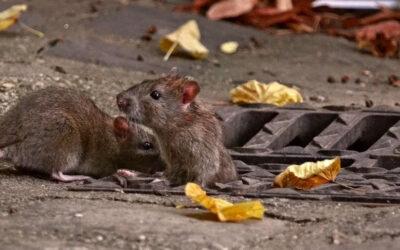 Control de roedores en espacios abiertos: entrevista a Alberto Foglia